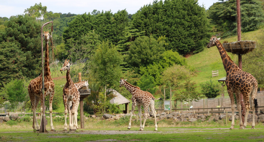 Why not visit Paignton Zoo during your holiday at Beverley View Lodges